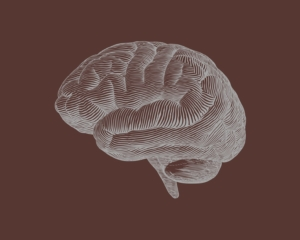 This Is Your Brain On Chocolate