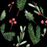Holly & Pine